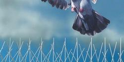 Ochranné systémy fasád proti ptactvu